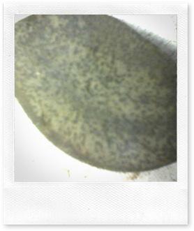 rocas1 002